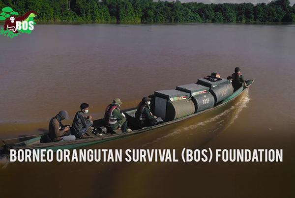 Salat Island: One Step Closer to #OrangutanFreedom