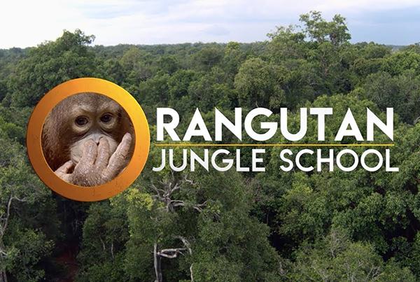 'Orangutan Jungle School'– Series Trailer